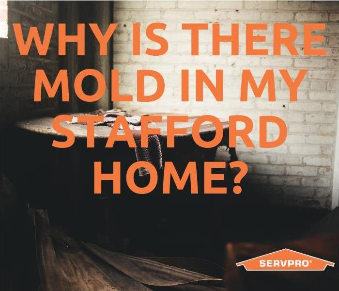 Mold Remediation Why Is There Mold In My Stafford Home?